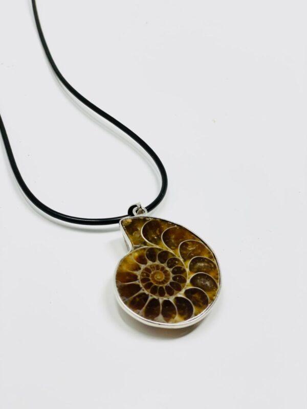 Ammonite_NK_side_82